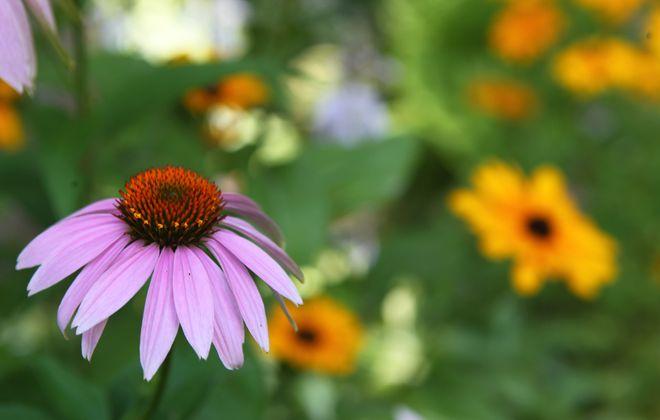 Garden walks are plentiful this weekend around Buffalo's suburbs
