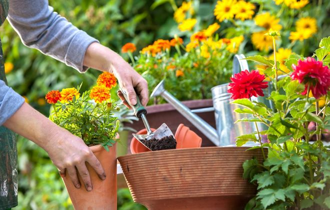 Gardening can be good for the body and mind – especially in uncertain times like these.