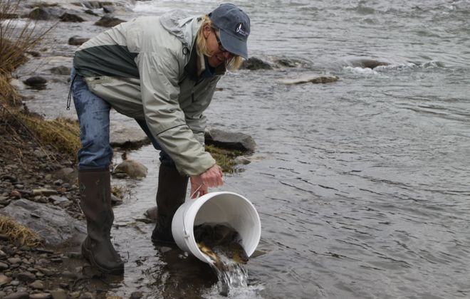 Stocking trout in Upper Cattaraugus Creek is just one of many spots in WNY that DEC will be distributing fish for the upcoming April 1 trout opener. (Bill Hilts, Jr./Buffalo News)
