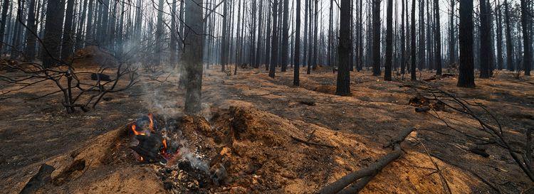 A smoldering log in the Wingello State Forest on Jan. 6, 2020, in Wingello, Australia. (Brett Hemmings/Getty Images)