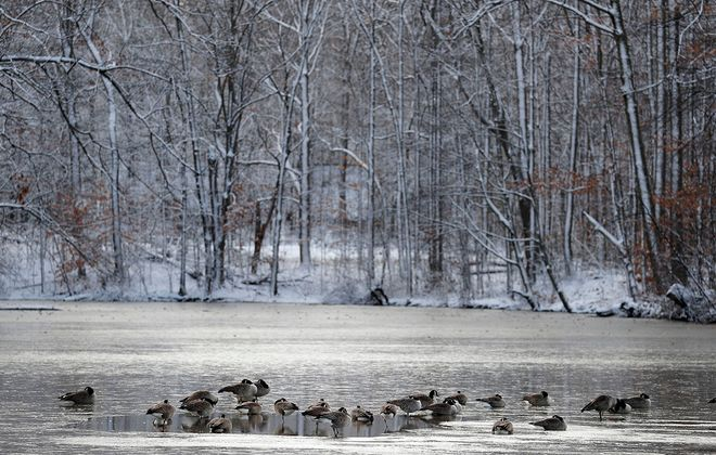 Canada geese sit on the thin ice and by a small open water hole on Green Lake in Yates Park in Orchard Park on Dec. 3, 2019. (Mark Mulville/Buffalo News)