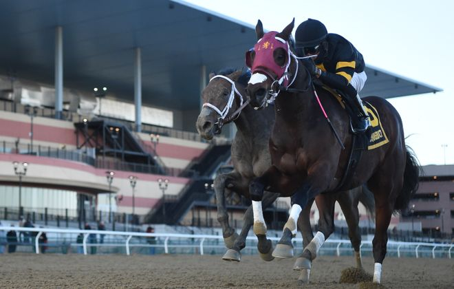 Shotski, the Remsen winner, will be the favorite in Saturday's Withers Stakes at Aqueduct. Photo Credit: NYRA