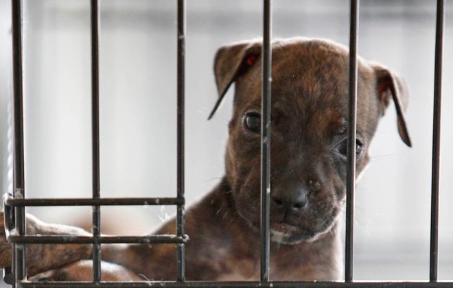 Pet stores say owners have no motivation to sell puppies bred at inhumane operations and that they are animal lovers just as much as the consumers buying their dogs, cats and rabbits. (Derek Gee/News file photo)