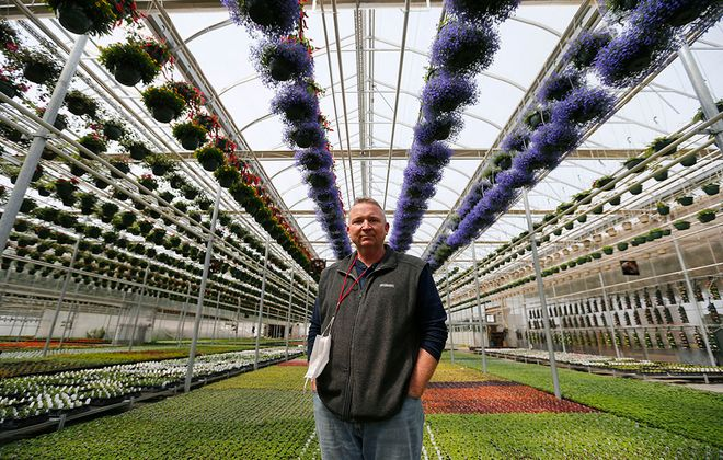 Dennis Brawdy, a partner at Amos Zittel  Sons Inc. in one of the greenhouses in Eden on Tuesday, April 14, 2020. (Mark Mulville/Buffalo News)