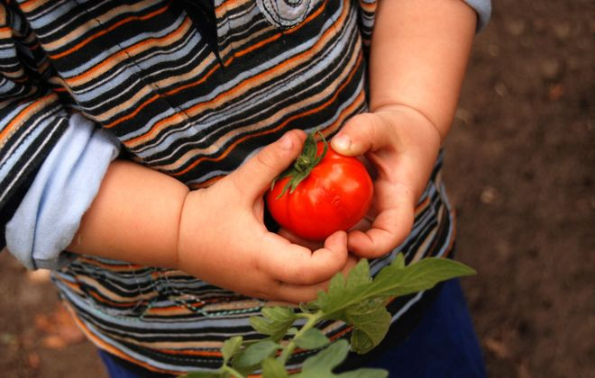 Encourage kids to discover gardening by planting a few things they will enjoy.