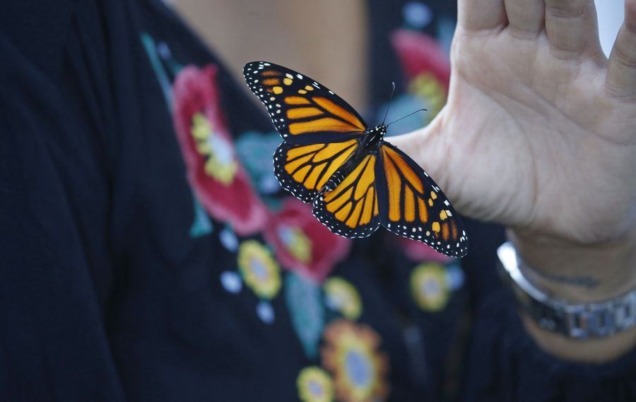 Kids can learn about butterflies and much more this summer.  (Robert Kirkham/News file photo)