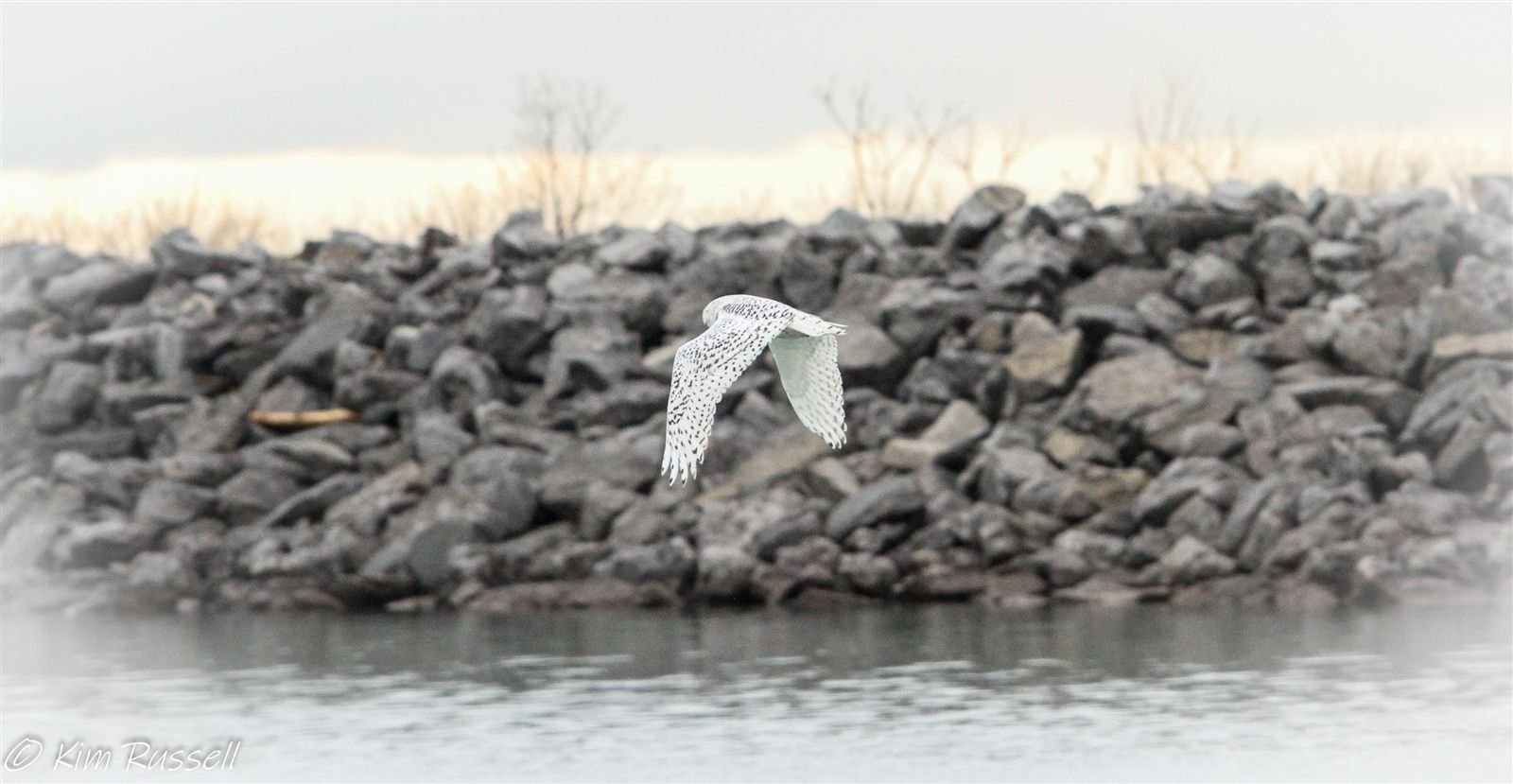 This photo of a snowy owl at flight was captured on Jan. 27, 2020, at the Buffalo Harbor State Park.